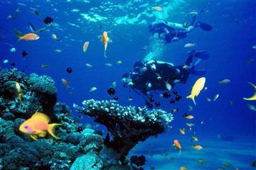上海长风海洋世界、东方明珠、科技馆、外滩、朱家角休闲二日游