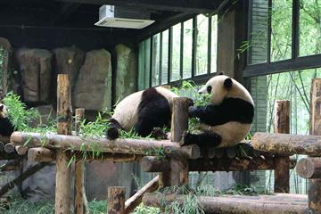 杭州野生动物世界百兽狂欢一日游