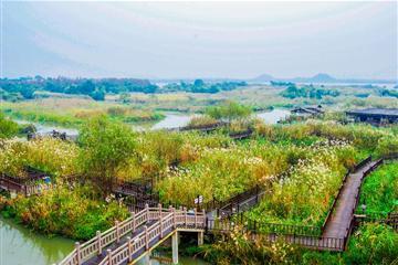 (精致小包团)德清莫干山庚村、下渚湖、新市古镇休闲纯玩二日游